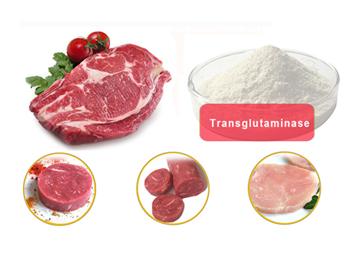 transglutaminase supplier