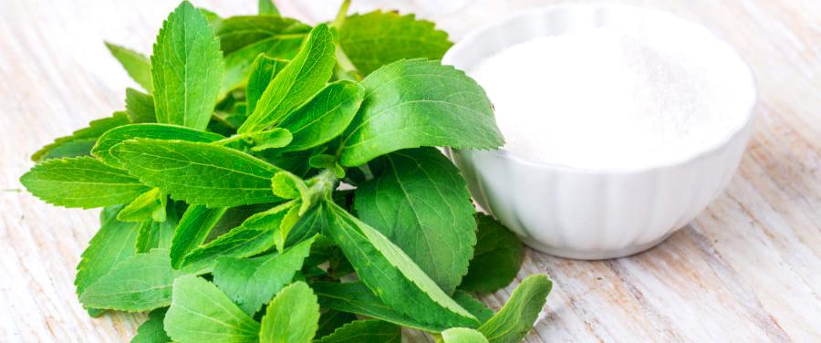Stevia supplier