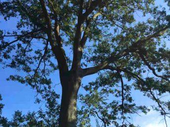 Arbor Day 2021 Foodchem
